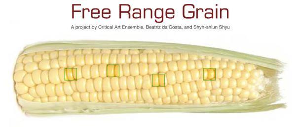 2004 Free Range Grain de Steve Kurtz